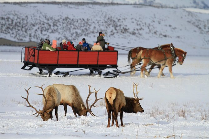 Grand Teton and National Elk Refuge Winter Day Trip